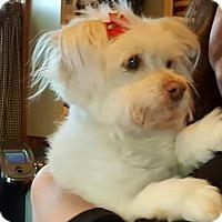 Adopt A Pet :: Coco - Freeport, NY