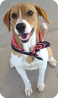 Hound (Unknown Type) Mix Dog for adoption in Pilot Point, Texas - Paisley