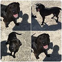 Adopt A Pet :: Jinx - Midway, AR