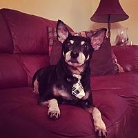 Adopt A Pet :: Tate - Davie, FL