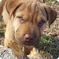 Adopt A Pet :: Leo - Jasper, TN