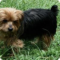 Adopt A Pet :: Rusty - Sarasota, FL