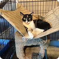 Adopt A Pet :: Sammie - Freeport, NY