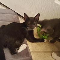Adopt A Pet :: Mikey - Land O Lakes, FL
