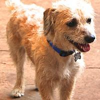 Adopt A Pet :: Bristol - Woonsocket, RI