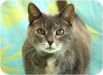 Calico Cat for adoption in Port Hope, Ontario - Smokey