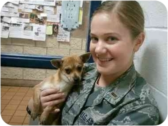 Chihuahua Mix Puppy for adoption in San Angelo, Texas - Bonnie the Chi
