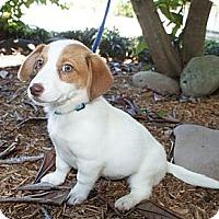 Adopt A Pet :: Jamie - Niceville, FL