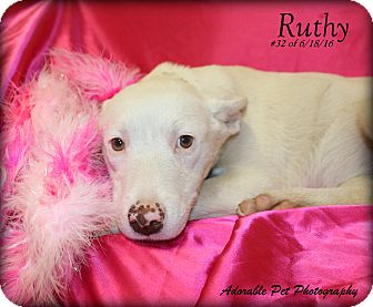Husky Mix Puppy for adoption in Gaylord, Michigan - Ruthy