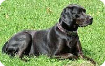 Coonhound Mix Dog for adoption in Franklin, West Virginia - Dobbie