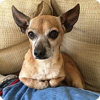 Adopt A Pet :: Spud - Durham, NC