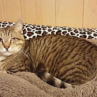 Adopt A Pet :: Handsome - Parkton, NC