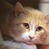 Adopt A Pet :: Bugzy - Edmonton, AB