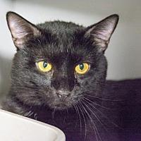 Adopt A Pet :: Mace - New York, NY