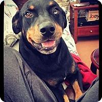 Adopt A Pet :: Samson - Grand Bay, AL