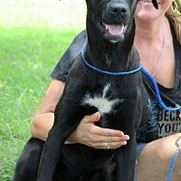 Adopt A Pet :: Miller - Southbury, CT