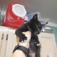 Adopt A Pet :: Mickey - Morgan Hill, CA