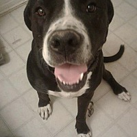 Adopt A Pet :: Dopey - Lancaster, CA