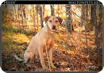Doberman Pinscher/Hound (Unknown Type) Mix Dog for adoption in Monroe, Georgia - Heidi