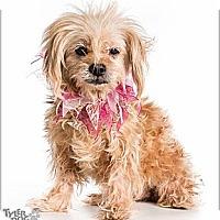 Adopt A Pet :: Aspen - Loveland, CO