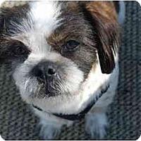 Adopt A Pet :: Evan - Dayton, OH