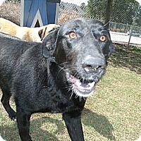 Adopt A Pet :: Kovu - Gadsden, AL