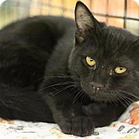 Adopt A Pet :: Secretariat - Sacramento, CA