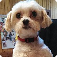 Adopt A Pet :: Norma - Topeka, KS