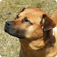 Adopt A Pet :: Hogan - Rigaud, QC