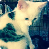 Adopt A Pet :: Callie - Delmont, PA
