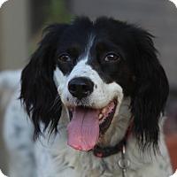 Adopt A Pet :: May - La Mirada, CA