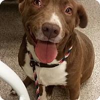 Adopt A Pet :: Sarah - Gainesville, FL