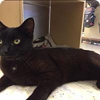 Adopt A Pet :: Kieron - Manchester, CT