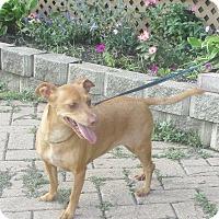 Adopt A Pet :: Unita - West Chicago, IL