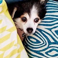 Adopt A Pet :: Wish - Dallas, TX