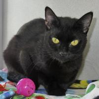 Adopt A Pet :: Essie - Houston, TX
