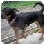 Photo 4 - Shepherd (Unknown Type)/Pointer Mix Dog for adoption in Marseilles, Illinois - Daisy 2