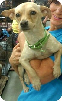 Chihuahua Mix Dog for adoption in Irmo, South Carolina - Munchkin