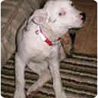 Adopt A Pet :: Macy - Mesa, AZ