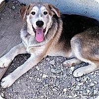 Adopt A Pet :: Shane - Clinton, ME