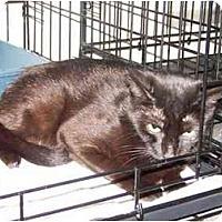Adopt A Pet :: Carisma - Syracuse, NY