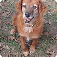 Adopt A Pet :: Isabella - Ravenel, SC