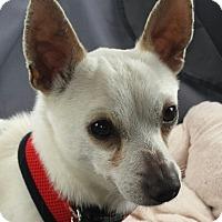 Adopt A Pet :: Gianni - Gig Harbor, WA