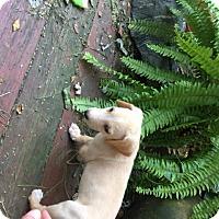 Adopt A Pet :: Jeff - Richmond, VA