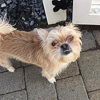 Adopt A Pet :: Sweetness - Rye Brook, NY