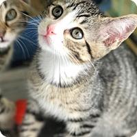 Adopt A Pet :: Hopper - Island Park, NY
