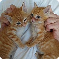 Adopt A Pet :: Janet - Saint Clair, MO