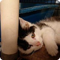 Adopt A Pet :: Po Po - Jefferson, NC