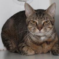 Adopt A Pet :: Morgan - Taylorsville, NC