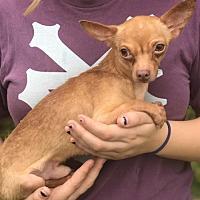 Adopt A Pet :: Gus - Louisville, IL